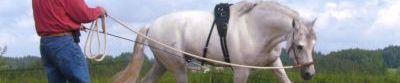 Horse Bodyformer